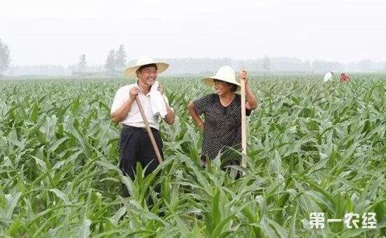 玉米穗期该施什么肥?玉米穗期施肥要点