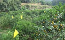 多种果树害虫绿色防治法