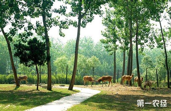 江西省拨款1亿元扶持林下经济 经济绿化两手抓