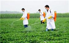 夏季花生怎么施叶面肥?花生叶面施肥技术指导