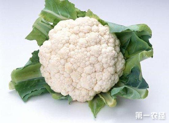 菜花如何做到科学施肥?菜花高产施肥技巧