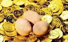 云南平安村:农村合作社推出新型养鸡模式