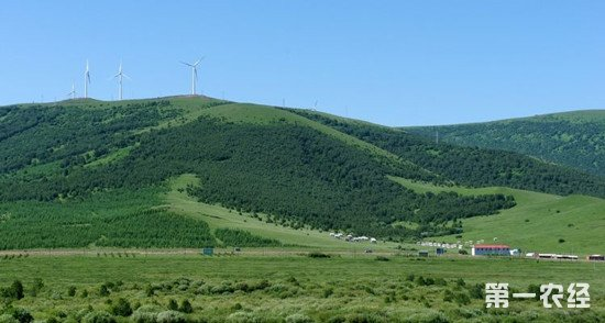 河北省六大措施化推动林业发展