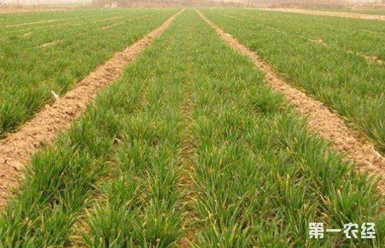 农业部专家指导:2018年东北小麦春播注意事项