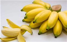 芭蕉和香蕉的区别有哪些?怎么区分