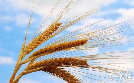 硅肥对主要农作物的作用