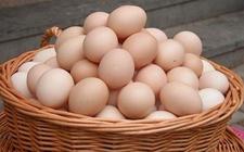 惊了!贵州禽蛋产量这么多,2017年禽蛋产量高达1.6万吨