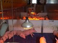 集装箱怎么养猪?可集装箱养猪有什么优势?