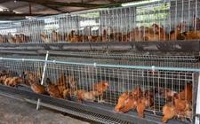 正大集团8亿元建300万只蛋鸡种养基地