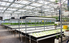 中国农学学科走向国际科技前沿 已取得一系列重要研究成果