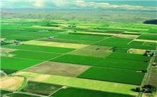 四川国土厅:任何人都不能踩永久基本农田的红线