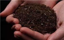 教你不使用试剂怎么分辨土壤的酸碱性