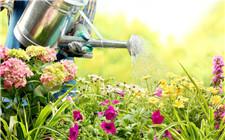养花该多浇水还是少浇水?花草浇水7大原则
