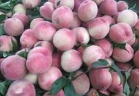 终南山下种桃子 带着乡亲种出致富果