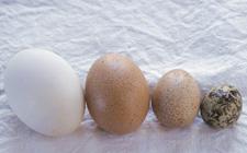 韩国:未来生产中将采用家禽生产追溯管理制度