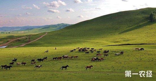 黑龙江草原生态逐步恢复 综合植被盖度达75%