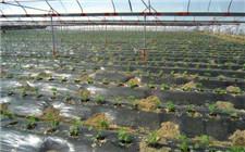 河南:水肥一体 优质高产