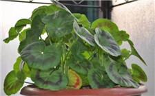 氮磷钾肥对植物的生长有什么用?如何判断植物缺哪种肥