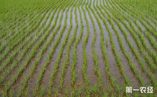 菲律宾将与巴新合作 派遣农民到巴新种植大米