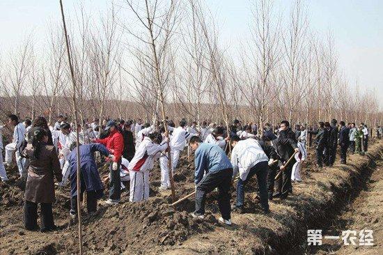 吉林省37年植树15亿棵