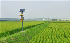 "<b>农业农村部:推进绿色防控 重点是抓好""五动""</b>"