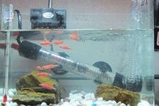 换水时鱼被开水烫到了怎么挽救?鱼缸里的加热棒烫伤鱼怎么办?