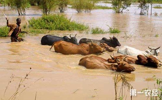 肯尼亚:持续降雨导致多地洪灾 已造成21万人流离失所