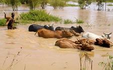 <b>肯尼亚:持续降雨导致多地洪灾 已造成21万人流离失所</b>