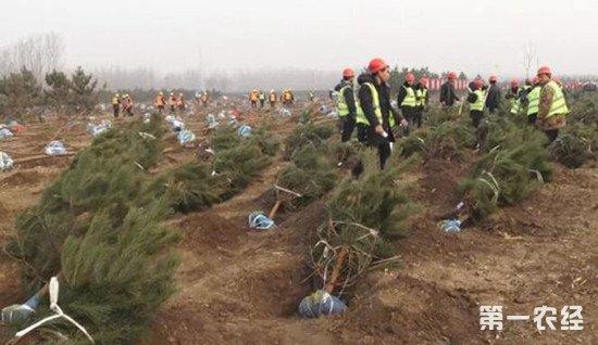 雄安新区设立一年 植树已达780万株