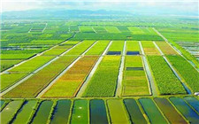农业农村部:农村如何走向高质量发展