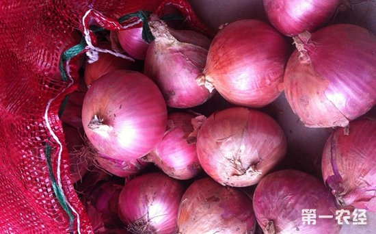 菲律宾截获大批走私洋葱 冒充苹果出口逃避关税