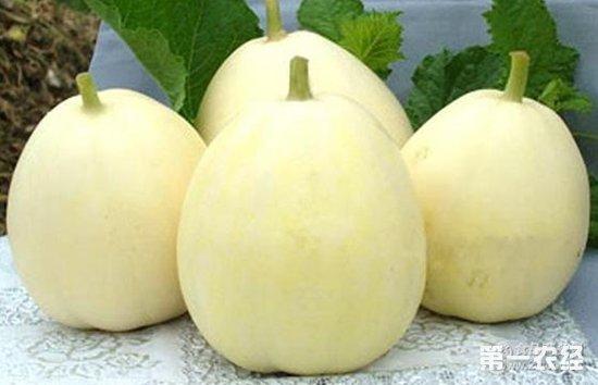 广西夏季瓜类水果大量上市 甜瓜批发价2.3-3元/斤