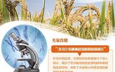 水稻研究再出成果 设计水稻不再是梦