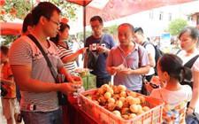 甘肃:精准扶贫 解决贫困户农产品销售问题