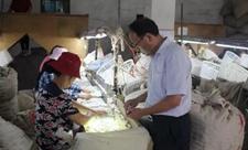 江苏工匠执着桑蚕事业32年让蚕茧带动一方百姓致富