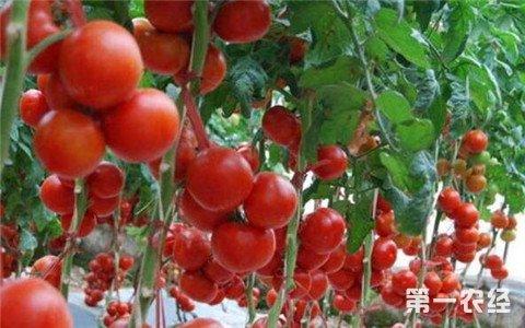 山东寿光:8个农民解决了盐碱地利用问题