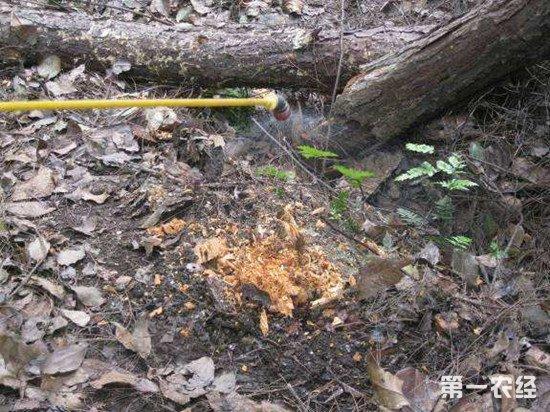 林业和草原局要求各地加强松材线虫病监测和报告
