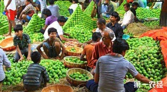 印度与八个国家签署农产品出口协议开发新市场