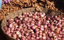 印度洋葱和大蒜丰产 价格大幅度下跌