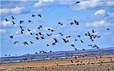 快手主播晒鸟类标本 牵出非法捕鸟大案