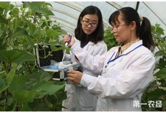 基层农技员短缺 定向免费培养能否缓解困境?