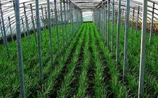 宁夏:积极发展蔬菜种植 推进蔬菜产业提质增效