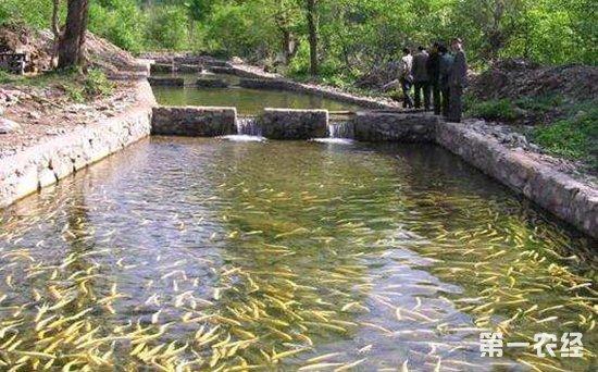 鱼塘养鱼致病的几种环境因素和人为因素