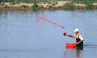 鱼塘药物治疗鱼病有哪些方法?鱼塘药物防治