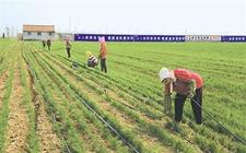 做好绿色防控工作 解决农业污染问题