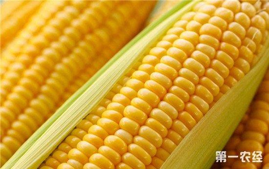 2018年5月份玉米价格或小幅反弹
