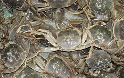 办水产合作社带着三千养蟹人风雨同舟增收致富