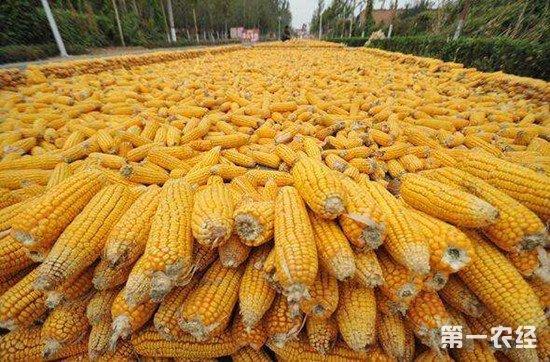"""内蒙古推出""""存粮卡"""" 解决农民粮食存储销售问题"""