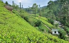 返乡创业开茶厂十几年光阴圆茶梦想