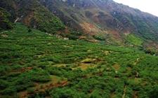 失地、退耕还林、休耕等农业补贴标准是怎样的?